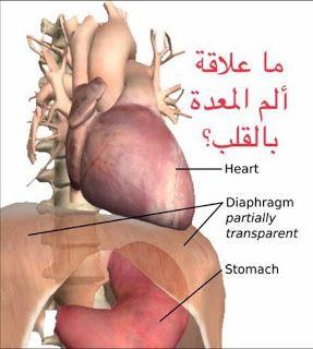 البيت العربي هل هناك علاقة بين ألم المعدة والمشاكل في القلب Blog Blog Posts