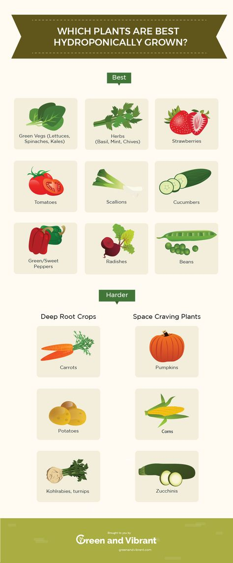 13 Best Easiest Plants (Vegetables, Herbs, and Fruits) That Can Be Hydroponically Grown - Trees.com