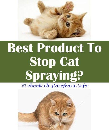 can a neutered cat spray