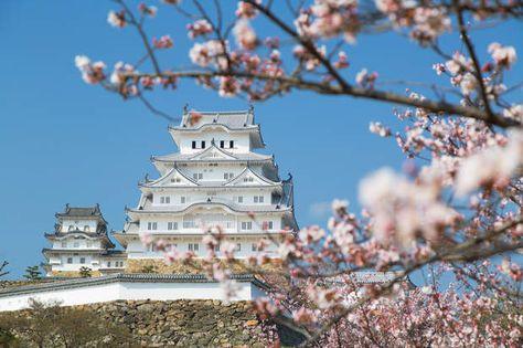 Japon - À l'école des ninjas, espions du Soleil-LevantC'est dans le château japonais d'Himeji que Bond s'initie aux techniques secrètes des ninjas dans On ne vit que deux fois. Lors du tournage, en 1966, des shuriken (fléchettes en métal) lancés par des acteurs avaient endommagé ses boiseries, provoquant un mini-incident diplomatique. Car cet édifice, à la fois aérien et imposant, jouit d'une grande popularité au Japon. Plus connu sous le nom de «château du héron blanc», il est l'un des…