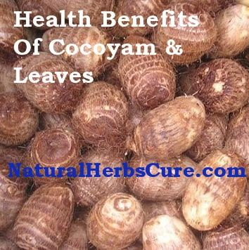 health benefits side effects cocoyam leaves | Natural Food