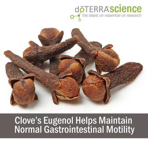 Clove's Eugenol Helps Maintain Normal Gastrointestinal Motility
