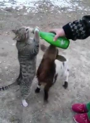 Give it back! It's mine!