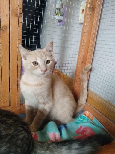 Adopt Ivan On Cat Adoption Help Homeless Pets Homeless Pets