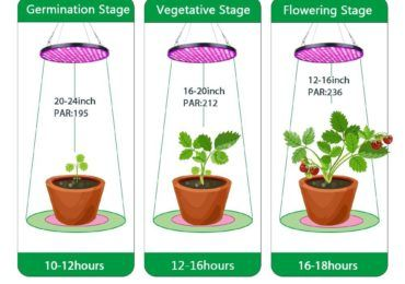 Growing Plants Indoors With Artificial Light Every Gardener Should Know Growing Plants Indoors Grow Lights For Plants Growing Plants