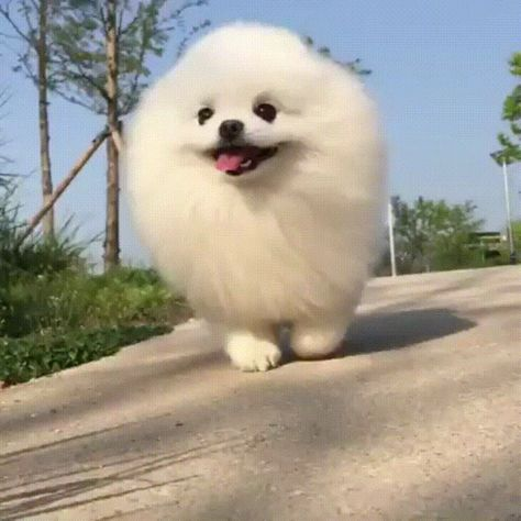 A particularly fast marshmallow