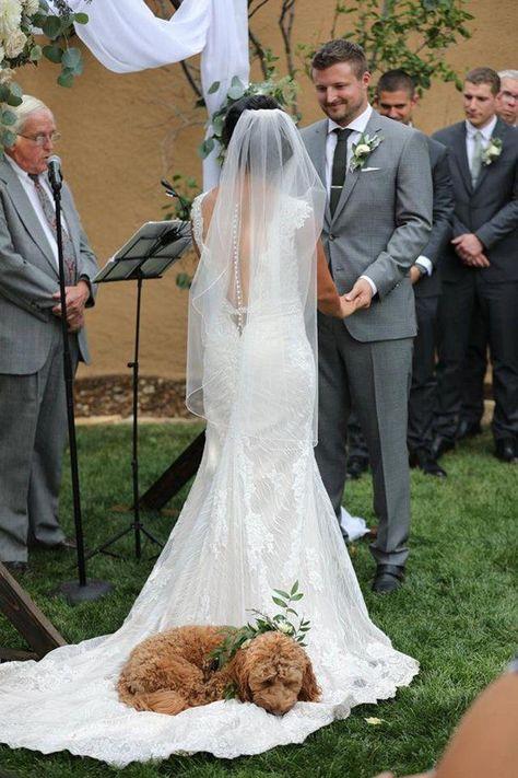 Maggie Sottero Wedding Dresses - Maggie Bride: Ashley Gaynor in WYATT Perfect Wedding, Dream Wedding, Wedding Day, Dogs In Wedding, Wedding Ceremony, Dog Wedding Dress, Dog Wedding Collar, Wedding Bells, Rustic Wedding