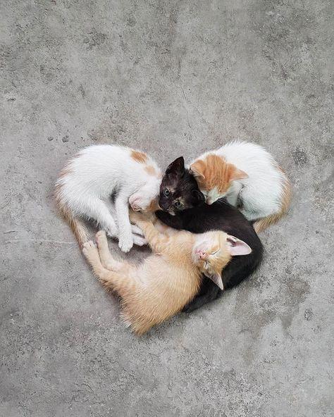 Cat Fancy Image By Amberlee Dawson Cute Cats Sleeping Kitten