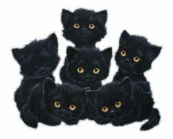 black cats Fan Art: cute