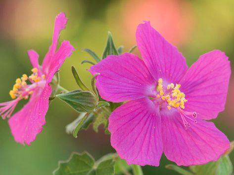 Native Plant Gardening Series: Plants I