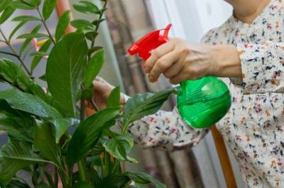 Indoor Thrips Control Getting Rid Of Thrips On Houseplants Plant Problems Houseplants Parts Of A Plant