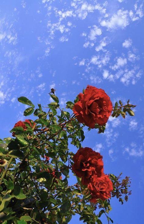 Erbe einer - Use me as your background - - Natur - Blumen