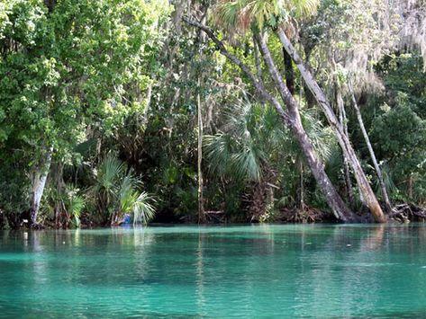 Authentic Florida - Eight Florida Springs for Summer Fun