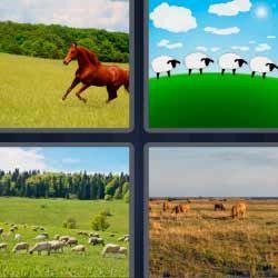 4 Fotos 1 Palabra Caballo Corriendo Ovejas Y Soluciones 4fotos 1palabra Com 4 Fotos 1 Palabra Letras Fotos