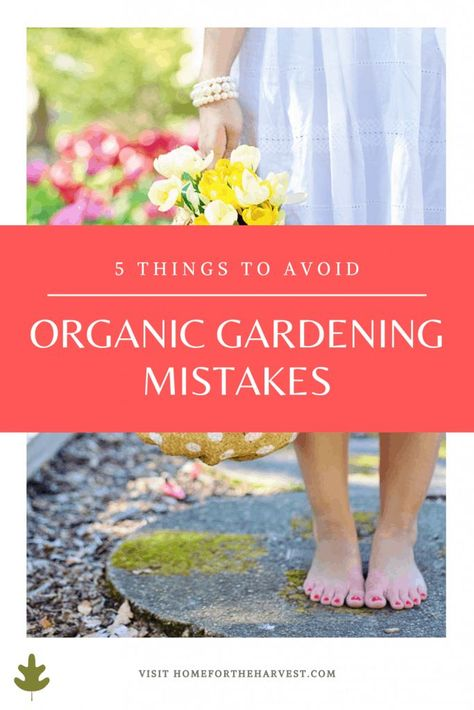 Organic Gardening Mistakes: 5 Things To Avoid in an Organic Garden - Home for the Harvest
