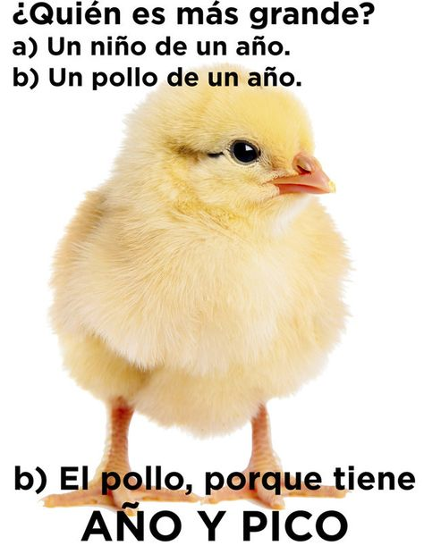 110 Memes Y Chistes Ideas Spanish Jokes Spanish Humor Spanish Memes