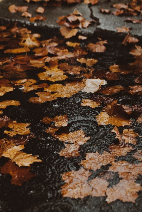 I love autumn and especially fall outfits ! Fall pumpking latte, fall inspiration, fall temperature, dead leaves and cold temperature ! Autumn Rain, Autumn Cozy, Autumn Leaves, Maple Leaves, Autumn Feeling, Autumn Nature, Autumn Forest, Sea Wallpaper, Fall Wallpaper
