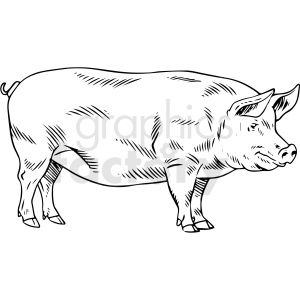 Black And White Realistic Pig Vector Clipart Pig Vector Vector Clipart Clip Art