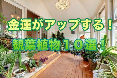 金運がアップする観葉植物10選 風水を良くしてお金を掴め 風水
