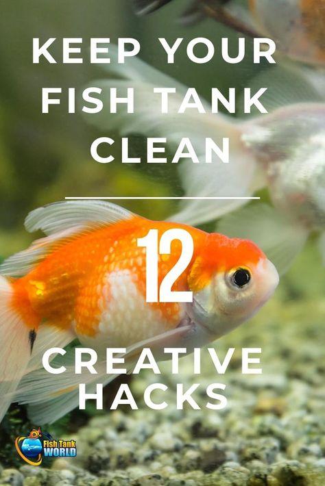 12 Creative Hacks To Keep Your Fish Tank Clean Fish Tank Cleaning Cleaning Fish Tropical Fish Tanks