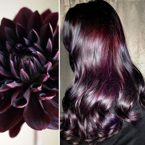 Black Dahlia By Ursula Goff Pelo Color Vino, Dahlia Noir, Curly Hair Styles, Natural Hair Styles, Colored Hair Styles, Natural Dark Hair, Colored Hair Tips, Make Up Braut, Hair Color And Cut