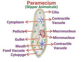 Pin By D Dhillon On Science Biology In 2020 Draw Diagram Science Biology Dear Students