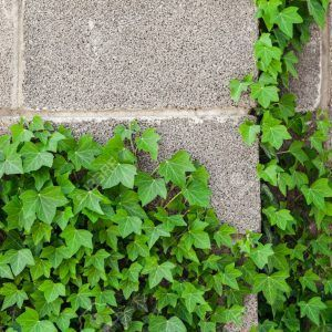 Concrete Composition And Landscape Concrete Leaves In 2020 Concrete Leaves Concrete Retaining Walls Cement Garden