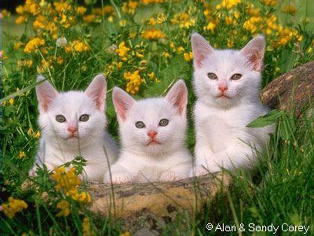 Pantip Com J3275225 ม ร ปเหม ยวน าร กมาฝากค ะ แมว ในป 2021 ส ตว น าร ก แมว แมวน อย