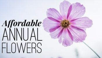 11 Inexpensive Annual Flowers For Your Garden Annual Flowers Flowers Name List Flower Names