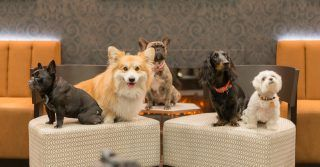 Dog Friendly Restaurants Where It S Okay To Lick Your Bowl Dog Friends Dog Friendly Hotels Dogs