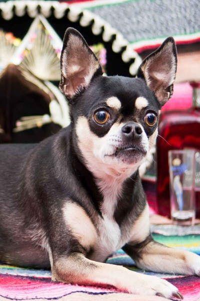 Mexican Dog Names Wag Top Dog Names Dog Names Dogs