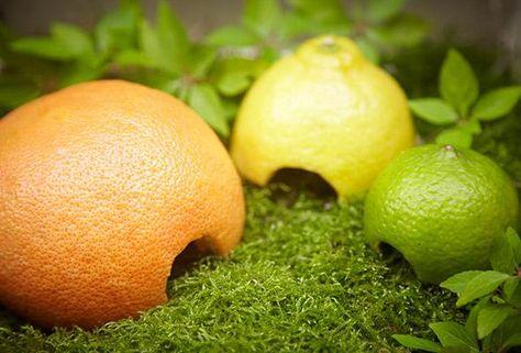 Limaces : Laissez des pelures de citron, d'orange et de pamplemousse à l'extérieur la nuit, près des plantes susceptibles de recevoir la visite de limaces, puis ramassez-les au matin, couvertes de limaces, pour les jeter à la poubelle. Vous pouvez également utiliser des feuilles de laitue flétries.