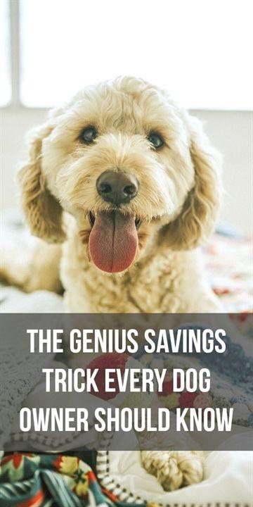 Large Dog Training Shock Collar Dog Training Not To Bite Dog