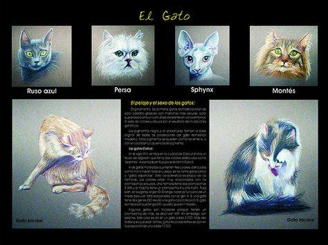Ilustración científica del gato