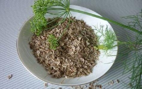 Отвар из семян расторопши: лечебные свойства, как ...