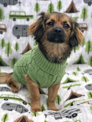Dogs For Adoption Near California Ca Petfinder Dogs Pet Search