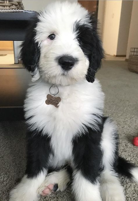 My best friend's puppy, Goose. Cute Dogs And Puppies, I Love Dogs, Doggies, Animals And Pets, Funny Animals, Happy Animals, Doodle Dog, Cute Little Animals, Cute Creatures
