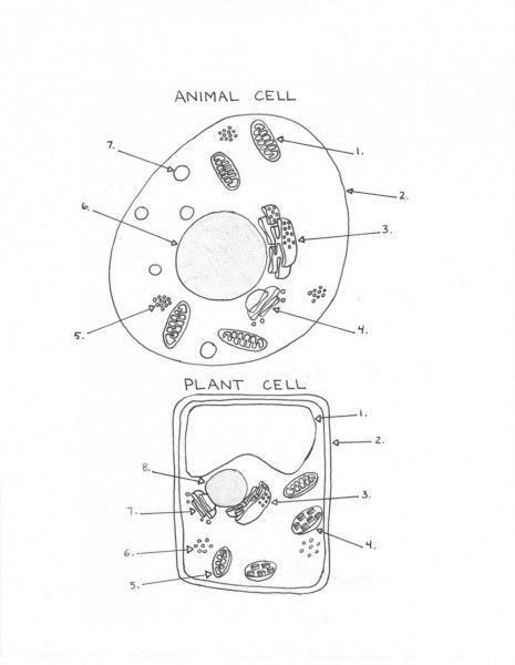 Plant Cell Animal Cell Worksheet In 2021 Cell Diagram Plant Cell Diagram Cells Worksheet