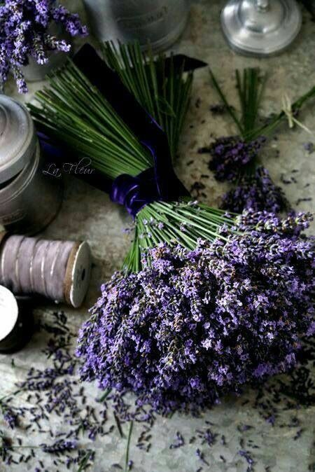 Lavenderdream Couleur Lavande Lavande Fleurs De Lavande