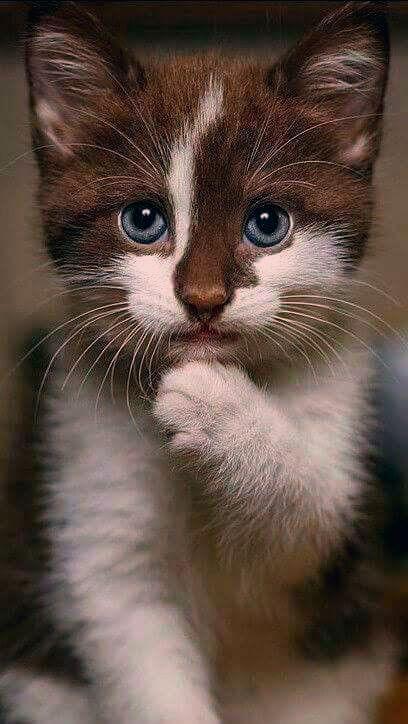 31 Susse Katze Bilder Adorable Katzchen Fallinpets Katzen Katzen