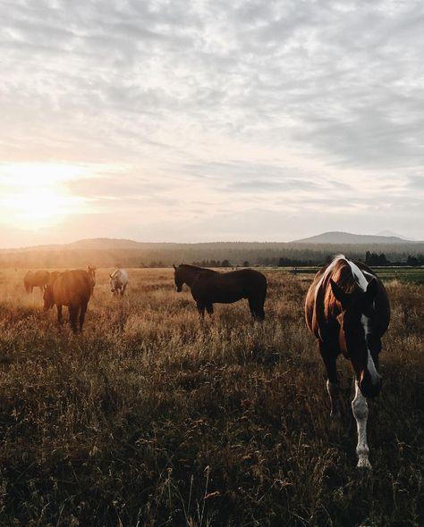 Travel Scenes: A Visit To Sunriver Resort, Oregon horses at sunset