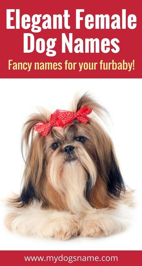 Names My Dog S Name Female Dog Names Unique Female Dog Names