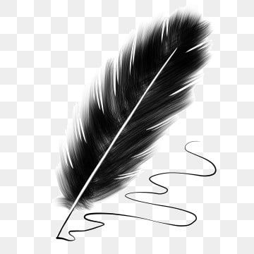 Pin By Alexandr Glebov On 65yrty Feather Illustration Black Feathers White Flower Png