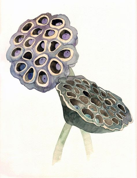 Items similar to Lotus Pods - Archival Print on Etsy