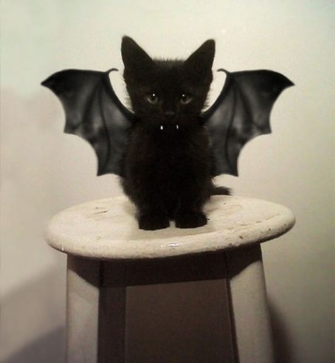 Bat Cat~ Ugh. Memories of an ugly intruder!