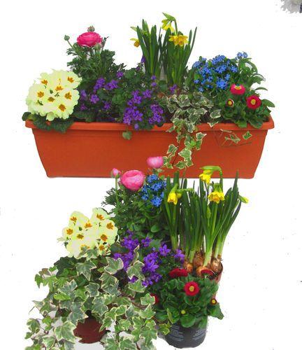Pflanzen Set Fur 60 Cm Balkonkasten Fruhling Mit Bildern