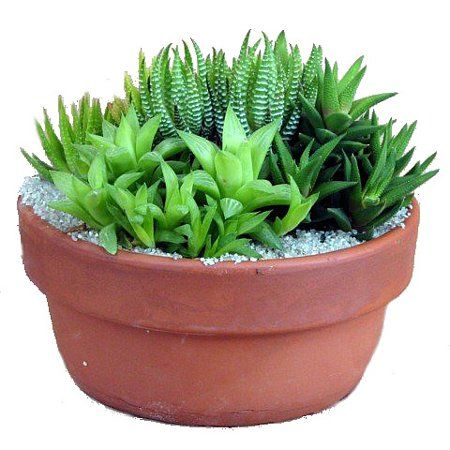 Patio Garden Tropical House Plants Small Succulent Plants Cactus House Plants