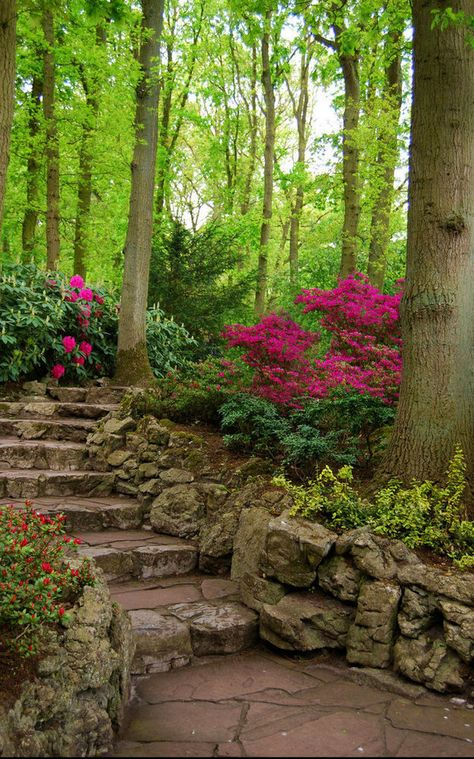 azaleas and ferns amidst mature trees in the hollow