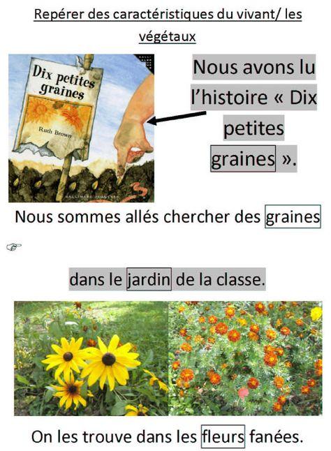 sac Mini graines de past/èque faciles /à planter d/élicieux fruits cultures jardin Mini graines de past/èque pour cour Mini graines de past/èque 10 pi/èces