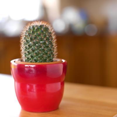 Cómo deshacerse de las chinches de los cactus | eHow en Español
